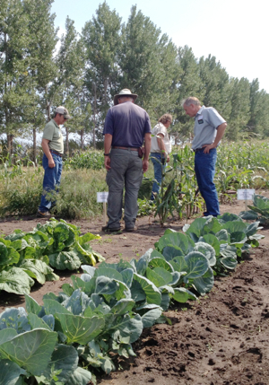 New Crops Field Day-7