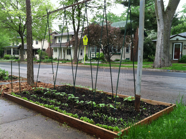The south portion of our boulevard, with its new raised bed and young pole beans, zucchini, spinach and lettuce.