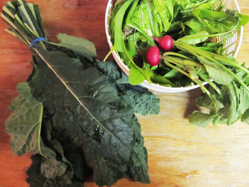 First vegetable harvest: We started the kale indoors way too early, and it was taking over the house. But now our tolerance for jungle life has been rewarded. We've always struggled with radishes, but the wet spring may give us better luck this year. And finally, our here-and-there lettuce (some in the tomato patch, some in bowls, some in the bean patch, some in the flower garden) should keep us eating salads for the next several weeks.