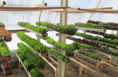 The deep winter greenhouse at Paradox Farm utilizes passive solar energy with underground heat storage and provides year-round greens for local consumers.