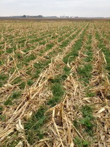 Scott Haase cover crops