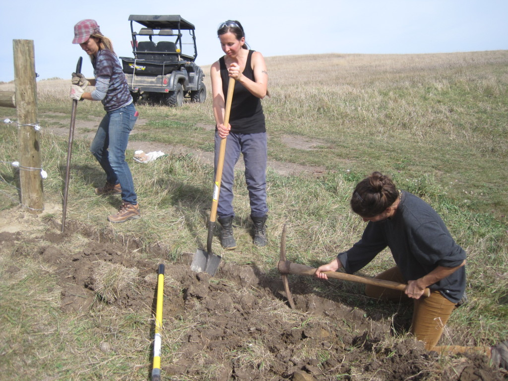 Farm Skills 101 students Kathryn Henning (from left) Cassi Dutcher and Sarah Mogilevsky dig a trench for a cable that will electrify two fence lines.