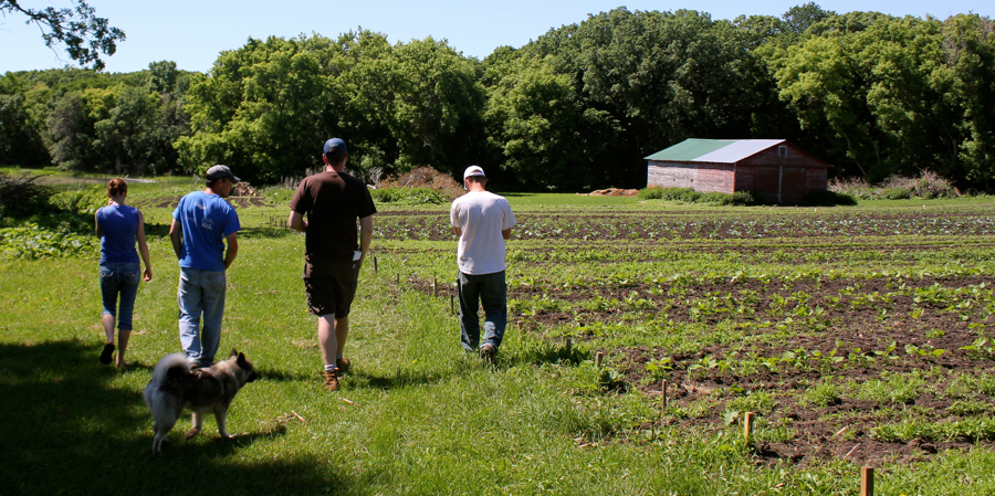 The farmers are working to restore Lakeside Prairie Farm to its native oak savanna prairie state while raising pastured beef and poultry as well as vegetables and oats. Photo by Bobby Wenner.